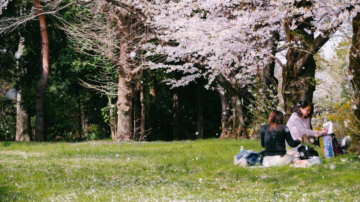Ladies having a picnic on green grass beneath a blossom tree.
